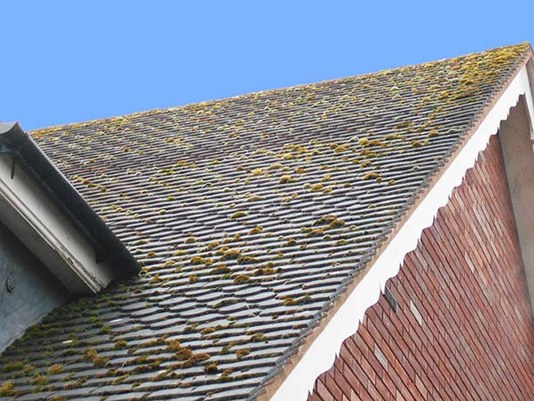 pitched roof before moss removal